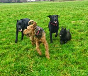 The Blandford Dog Walker