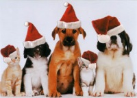 Merry Christmas Pups and Cats